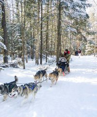 Dog Sledding and Snow Tubing