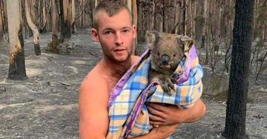 One Bloke Has Defied The Burnt Mallacoota Forest To Save A Bunch Of Koalas